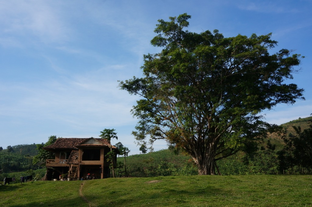 Wooden house and huge tree