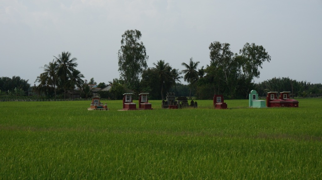 Tombs in the middle of rice fields