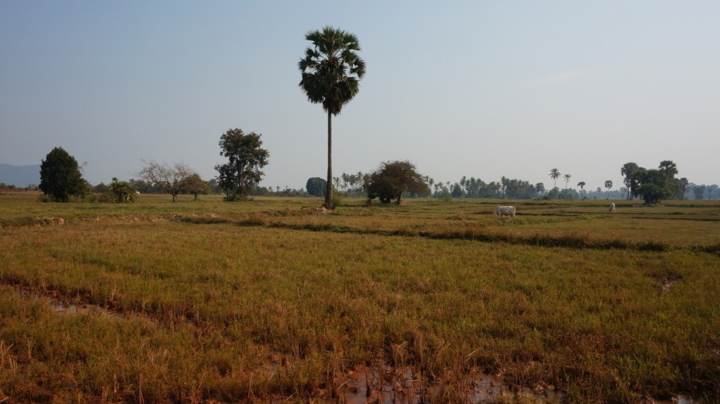 Cambodia's countryside seen from the dirt roads