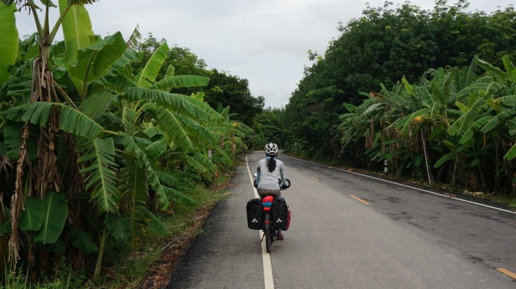 Dense banana trees on a road parallel to road 212